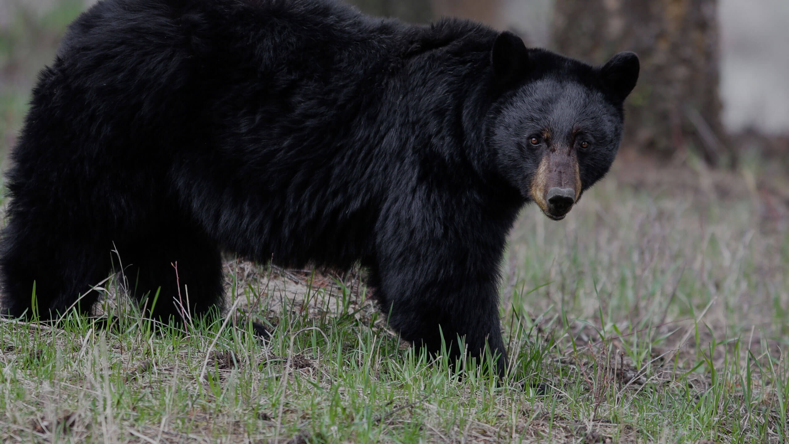 hunting black bear new mexico - G3 Outfitters
