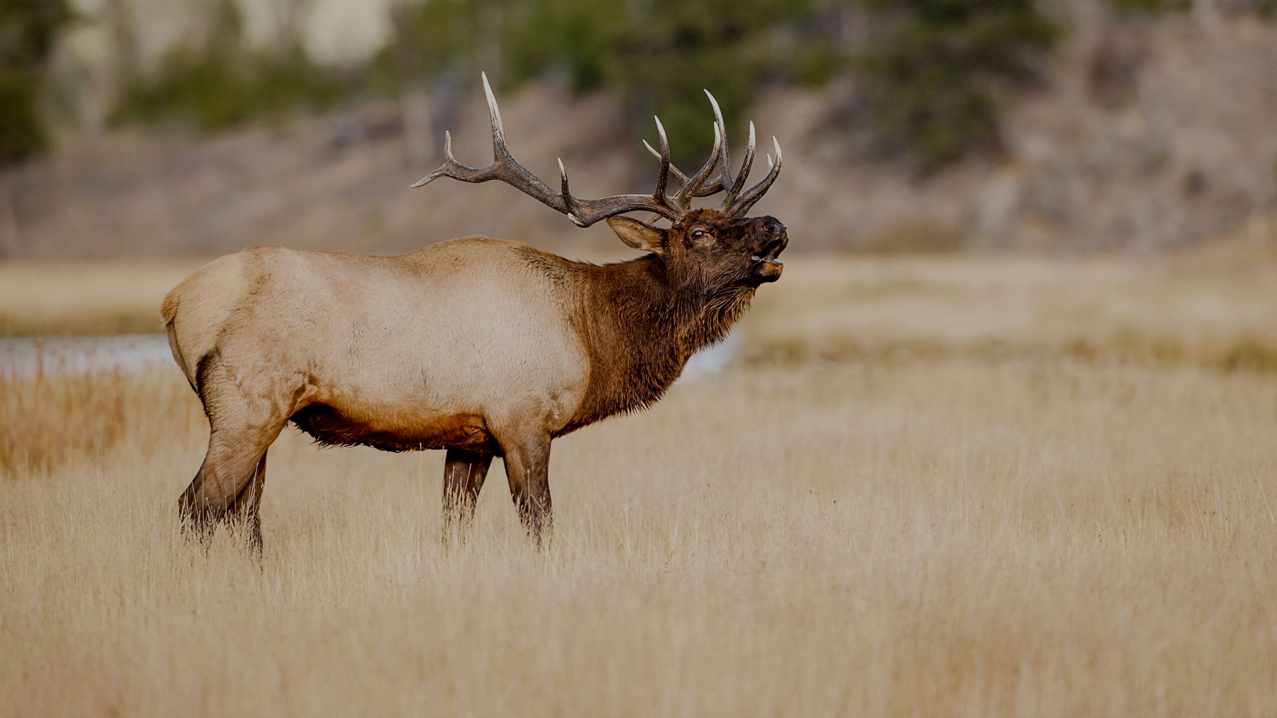 elk hunting outfitter New Mexico