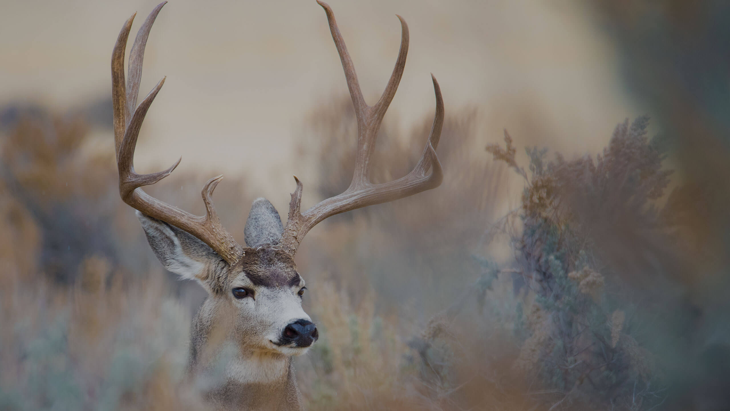 mule deer hunt New Mexico - G3 Outfitters