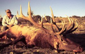 late season rifle trophy elk hunt unit 36 New Mexico